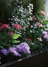 花坛里的小花