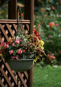 花园栅栏上的盆景
