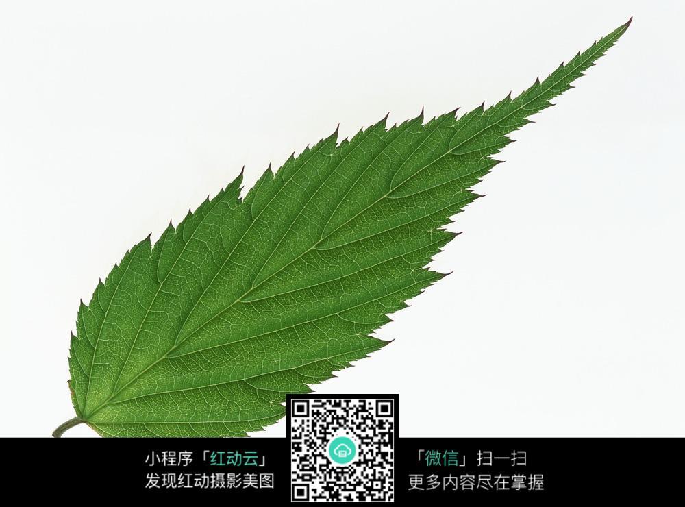 树叶图片_花草树木图片