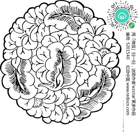 缠绕植物花纹
