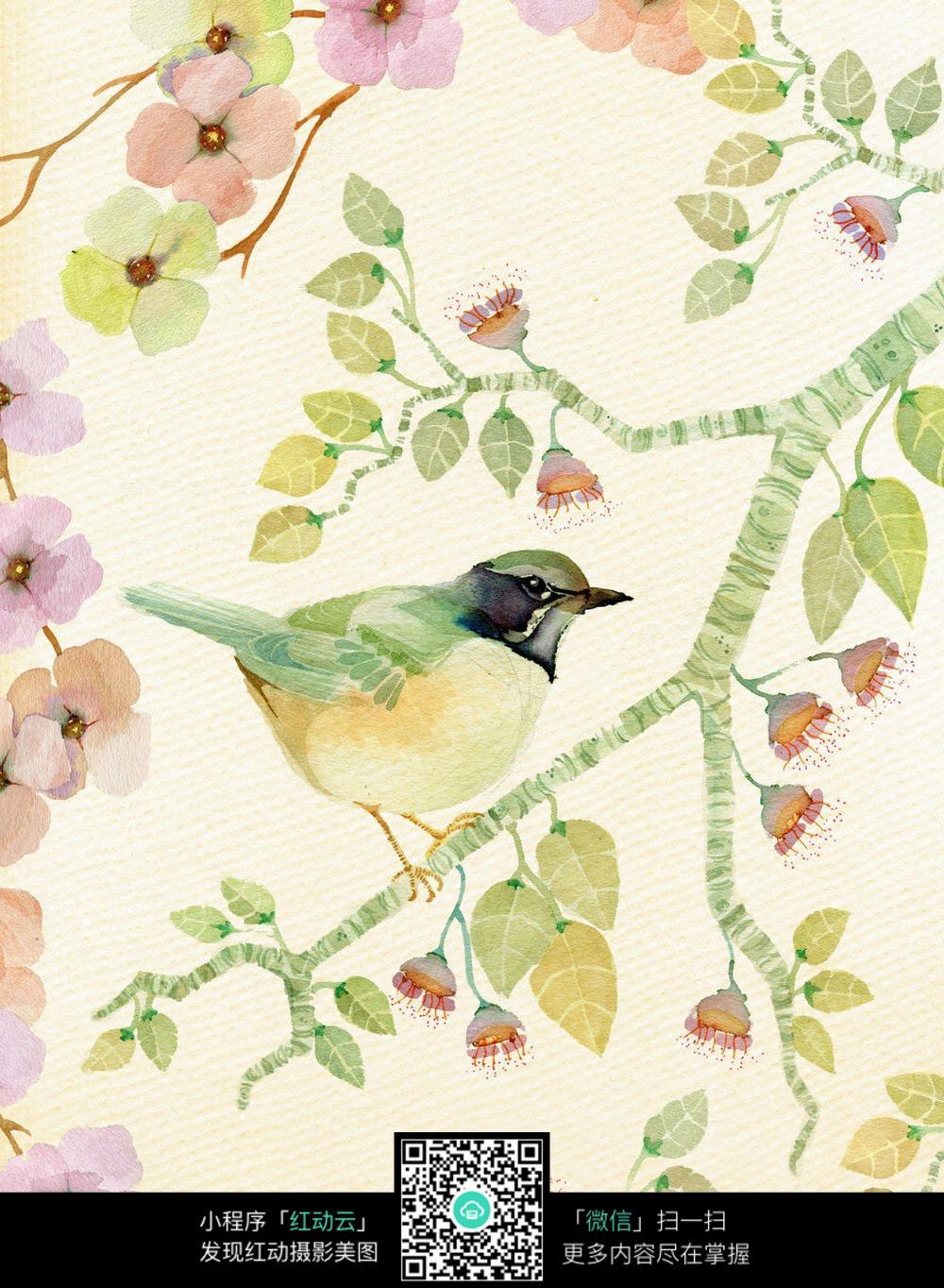 清新小鸟花朵图片素材