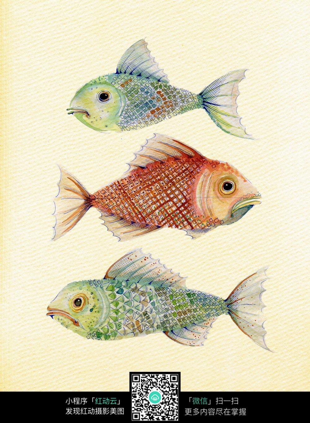 三条金鱼手绘彩图