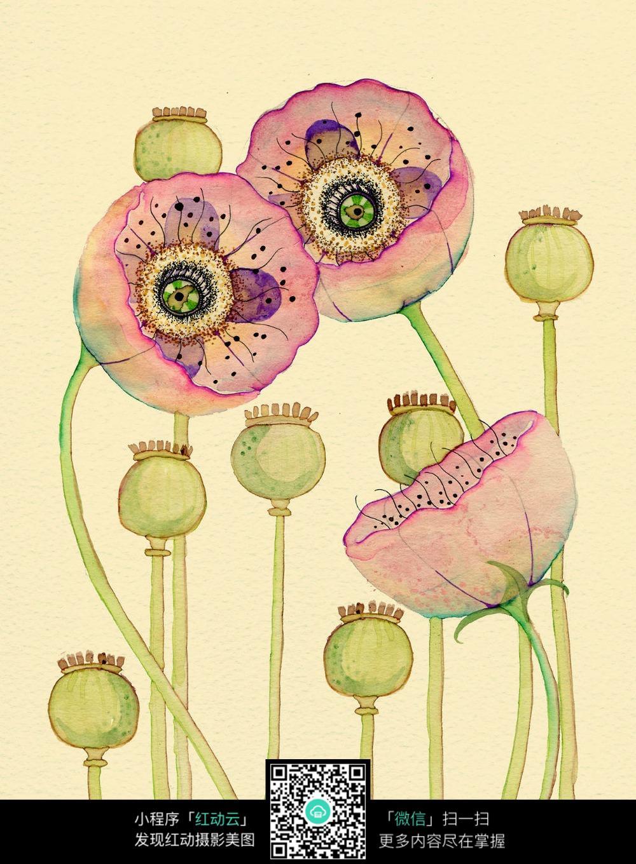 罂粟简笔画-手绘罂粟花插画 其他图片
