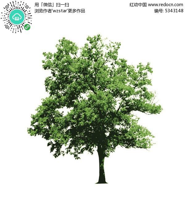 一颗绿色的树模板矢量素材eps免费下载_花草树木