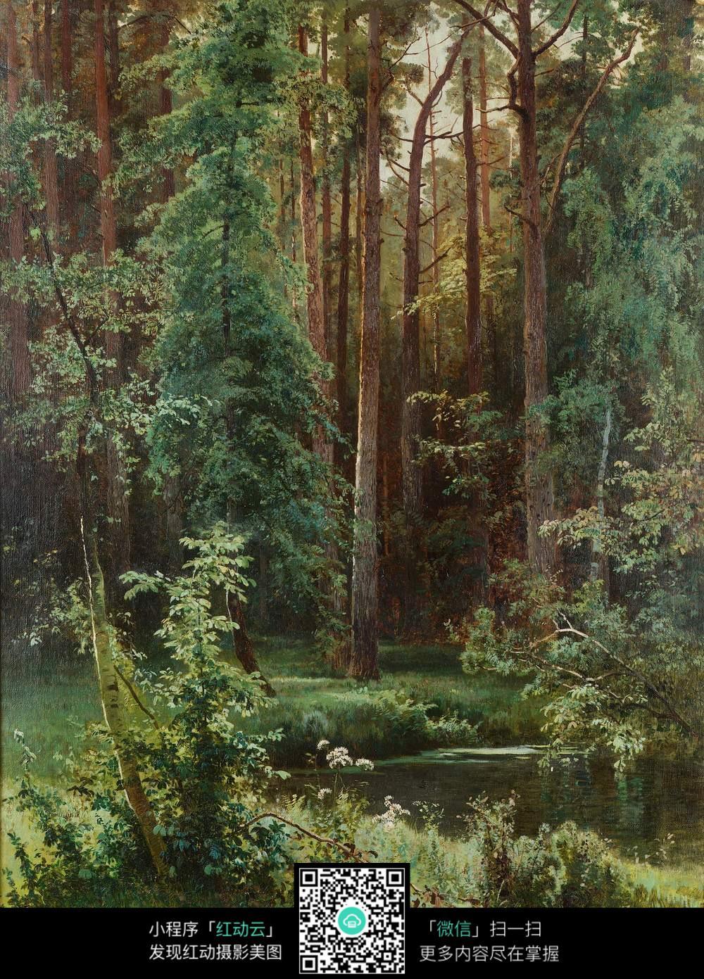 美术图片大全森林