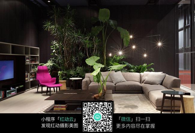 客厅大型植物装饰_室内设计图片