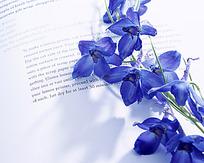 放在书本上的桔梗花