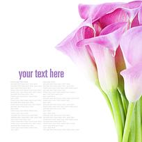 高清花卉装饰画图片