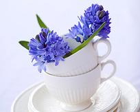 装在白色茶杯里的紫色薰衣草