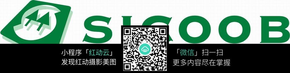 绿色公司logo设计图片