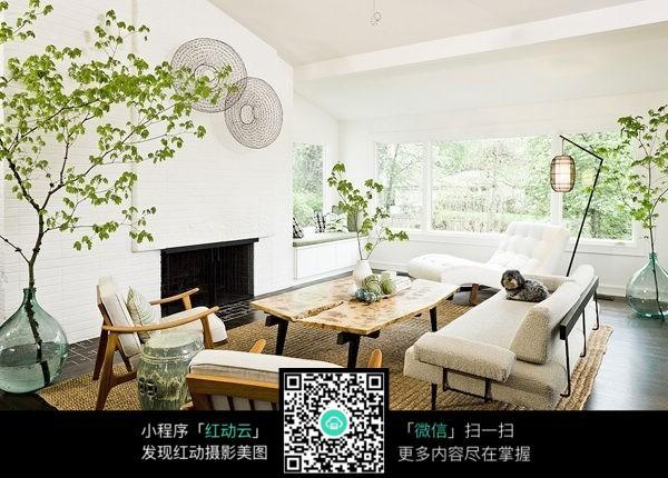 客厅植物装饰_室内设计图片