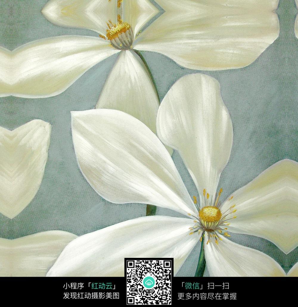白色花朵绘画图片素材