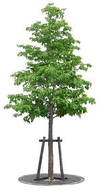带有木架的绿色树木 PSD分层素材