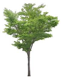 绿化环境树木psd素材