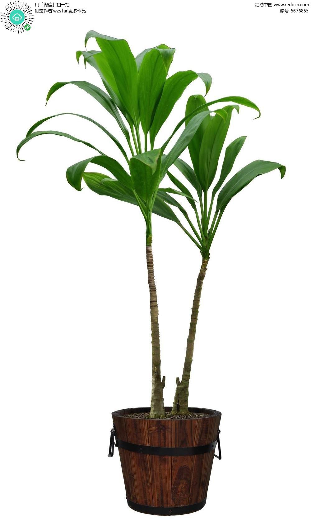 木质花盆的绿色植物盆栽psd素材