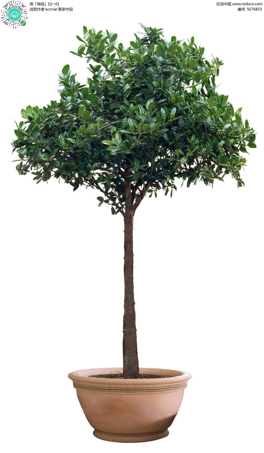一棵翠绿色小树盆栽植物