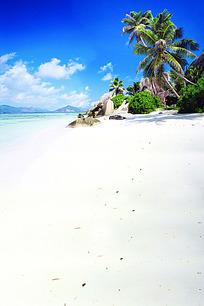 蓝天白云下的白色沙滩和棕榈树