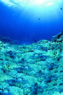 阳光照射下的深海里的珊瑚礁