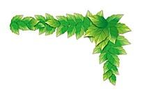 绿叶边框矢量装饰