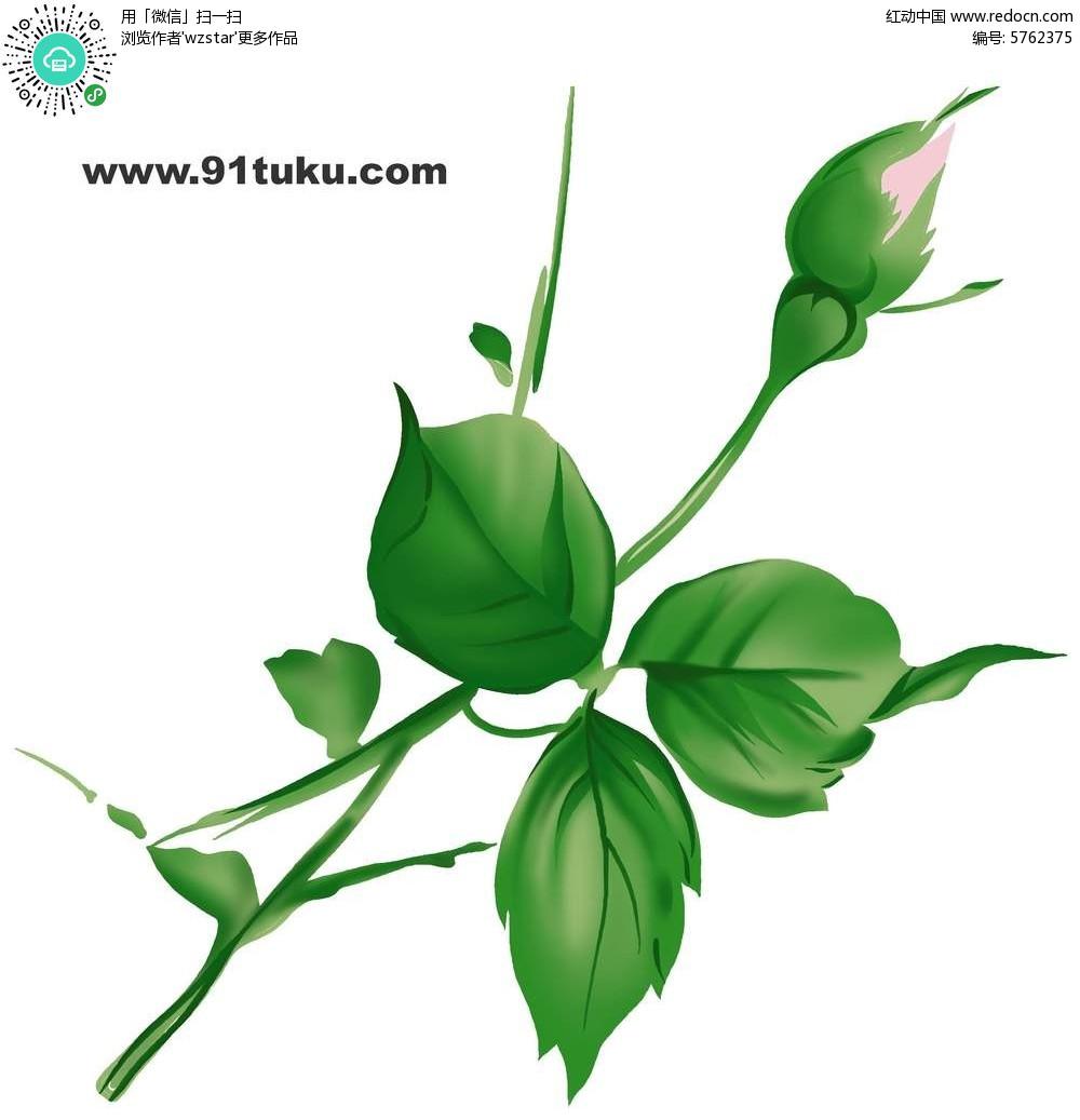 绿色植物插画