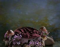 创意乌龟摄影模板