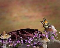 蘑菇与蝴蝶