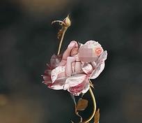 花朵中的宝宝创意写真模板