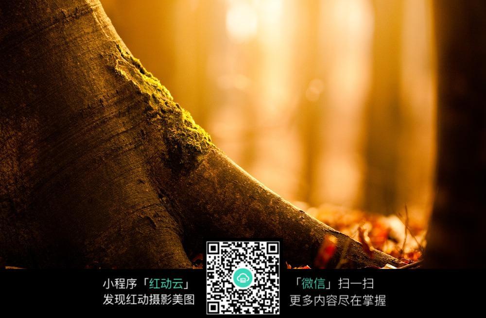 粗壮的树根图片素材下载图片免费下载 编号5881931 红动网
