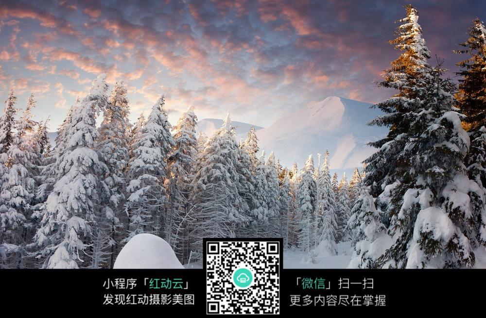 大雪覆盖的树林图片素材
