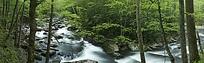 林间小溪水秀丽风景图片