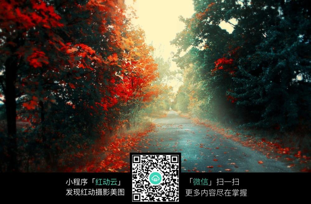 秋季落叶唯美道路风景图片