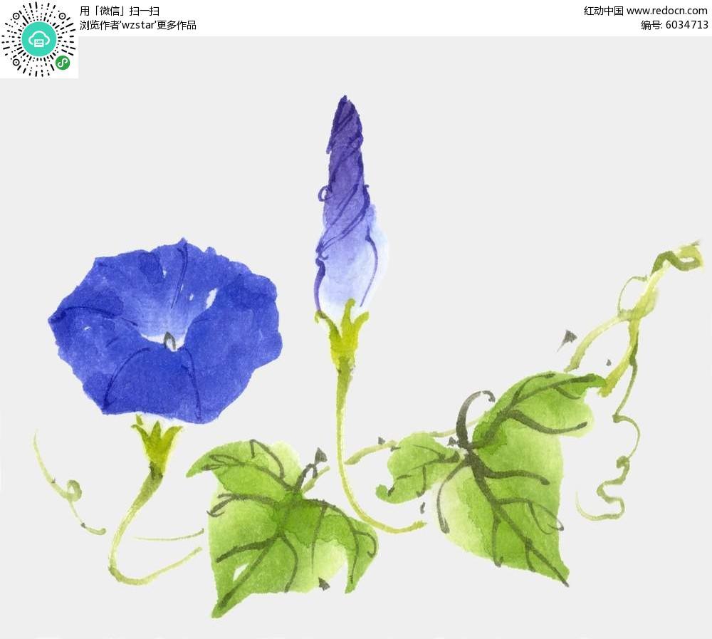 蓝紫牵牛花背景素材图片图片