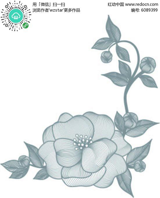线条的牡丹花图片