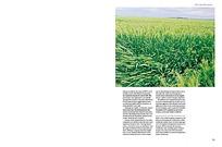 田园杂志内页设计