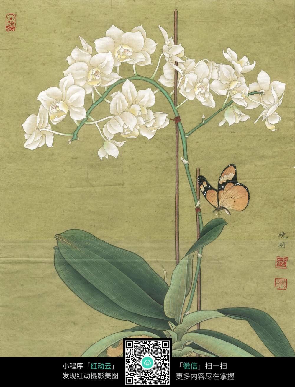 蝴蝶花朵中国风插画