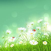 彩绘太阳菊插画
