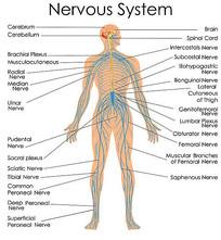 超高清神经系统矢量图