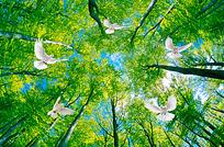 树林鸟背景墙