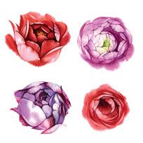 彩植物花卉花朵矢量素材