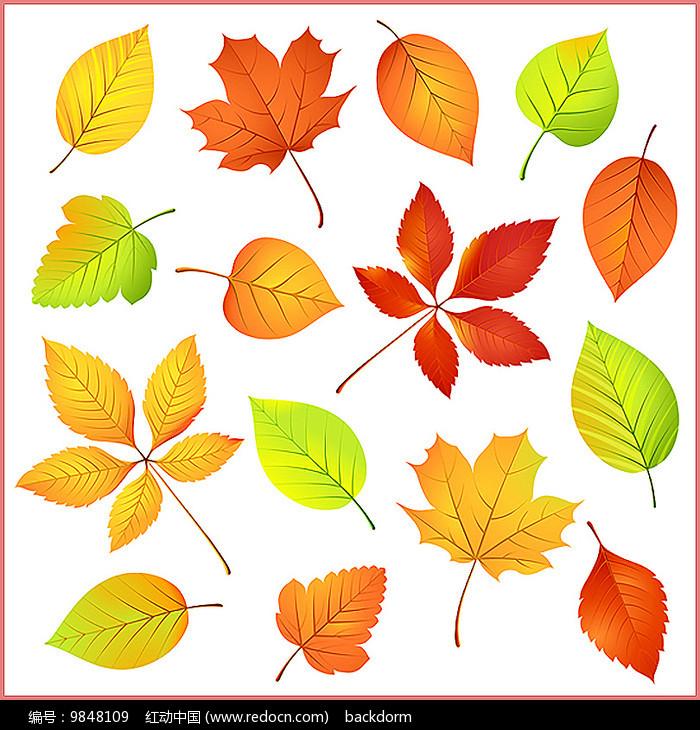 矢量树叶素材图片