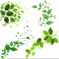植物叶子素材