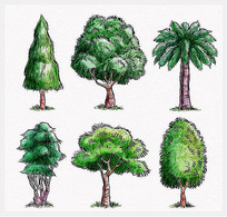 彩绘绿色茂盛树木矢量图