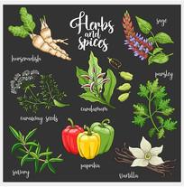 彩绘中式美食香料矢量图