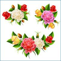 矢量蔷薇素材