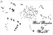 飞翔的鸟群PS笔刷