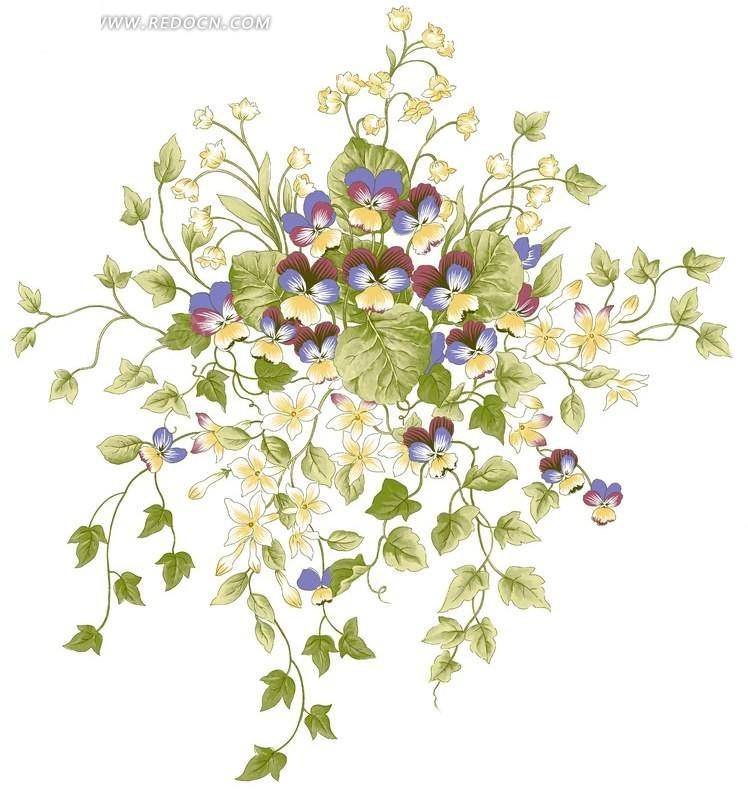 手绘蝴蝶兰藤蔓植物图片