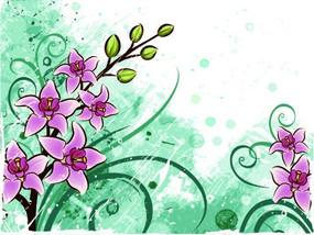 粉绿色背景上的洋红色蝴蝶兰
