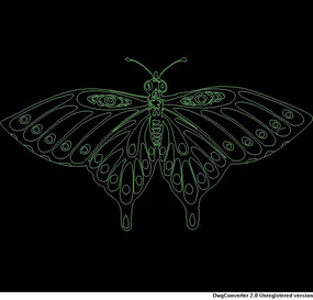 蝴蝶CAD图028