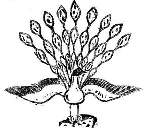 一只孔雀白描画