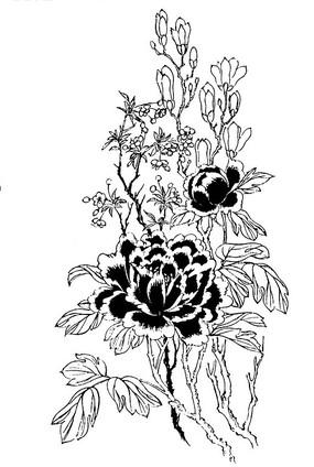 工笔白描图-牡丹花